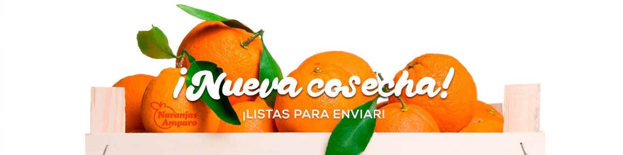Naranjas Amparo